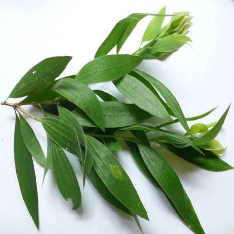 Ulei esential de Arbore de ceai ( tea tree )