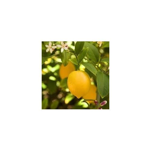 Ulei esential de Lamaie - Limone - 10ml