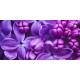 Parfumant cosmetic Liliac
